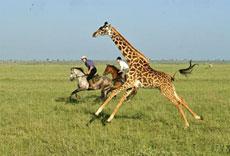 12-chyulu-safari11
