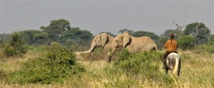 2012_Masai_Mara_pano (37)