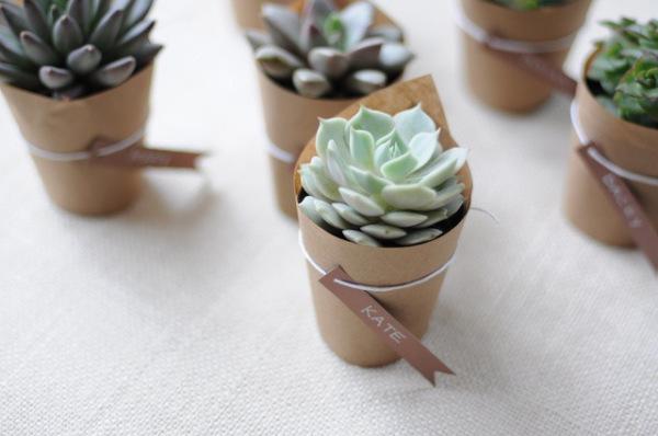 10-Minis-plantes