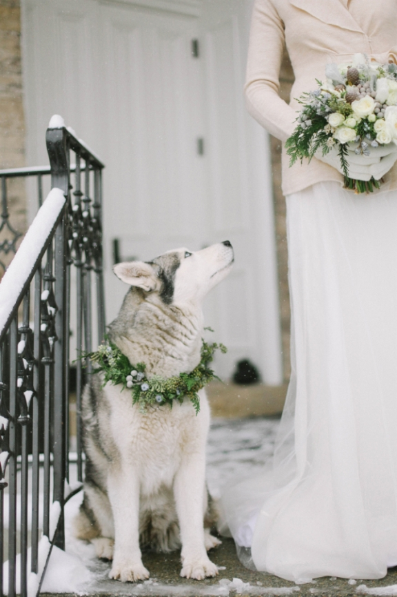 Husky-in-Winter-Wedding-600x900